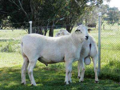 Kalnari Australian Whites