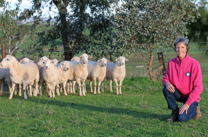 Kerrie Plum with purebred Australian White rams, aged 12 months, at Kalnari. (Photo by HMFD)